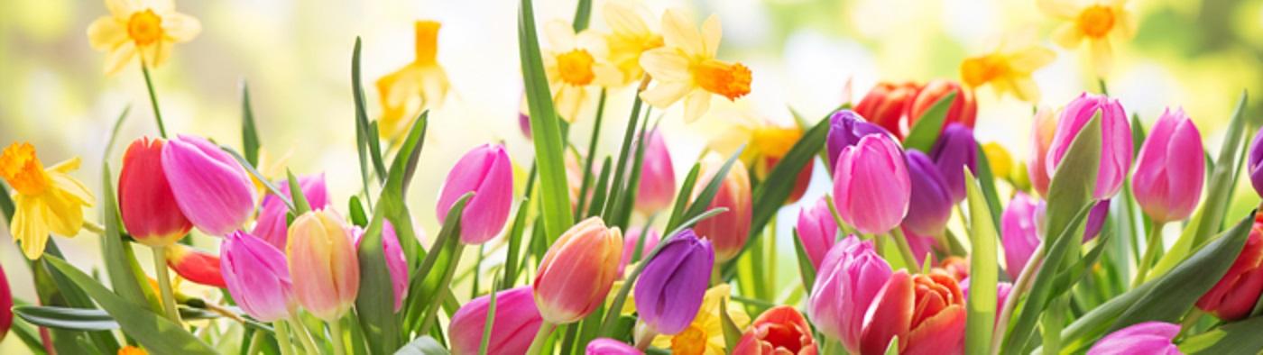 عطرهای پیشنهادی بهاره زنانه و مردانه (9)
